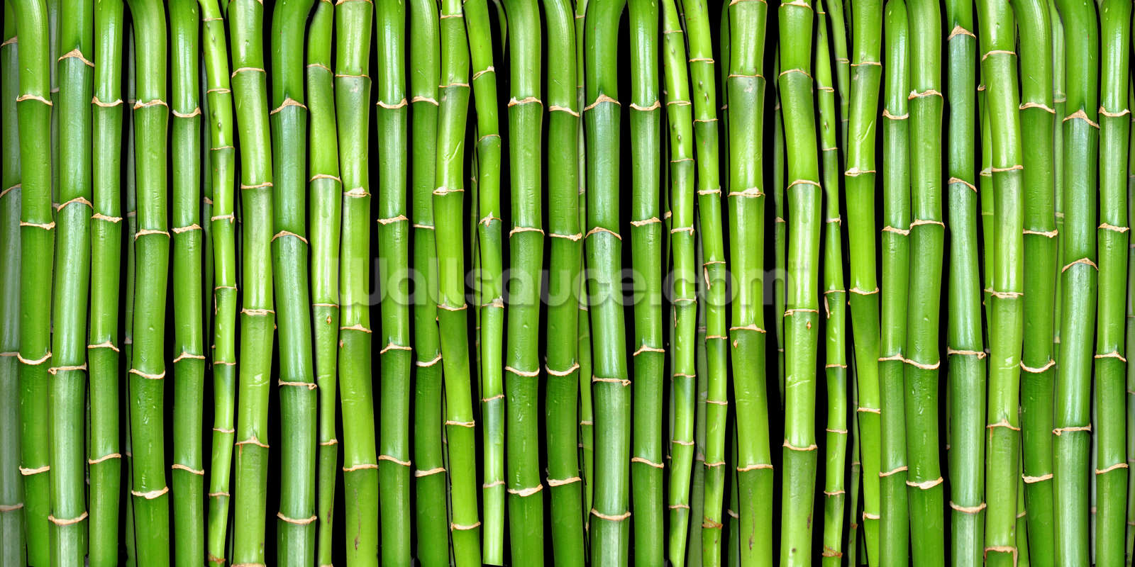 Bamboo wallpaper wall mural wallsauce for Bamboo wall mural wallpaper