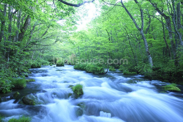 Spring Forest River Wallpaper Wall Mural