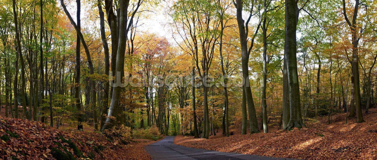 Colourful Autumn Woodland Wall Mural Photo Wallpaper Part 84