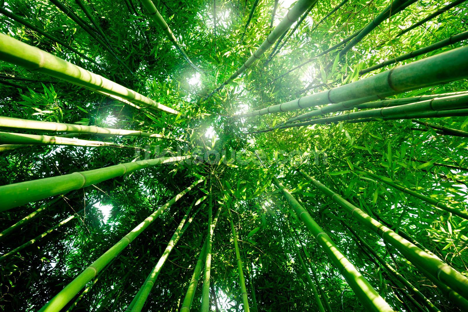 bamboo forest wallpaper wall mural wallsauce