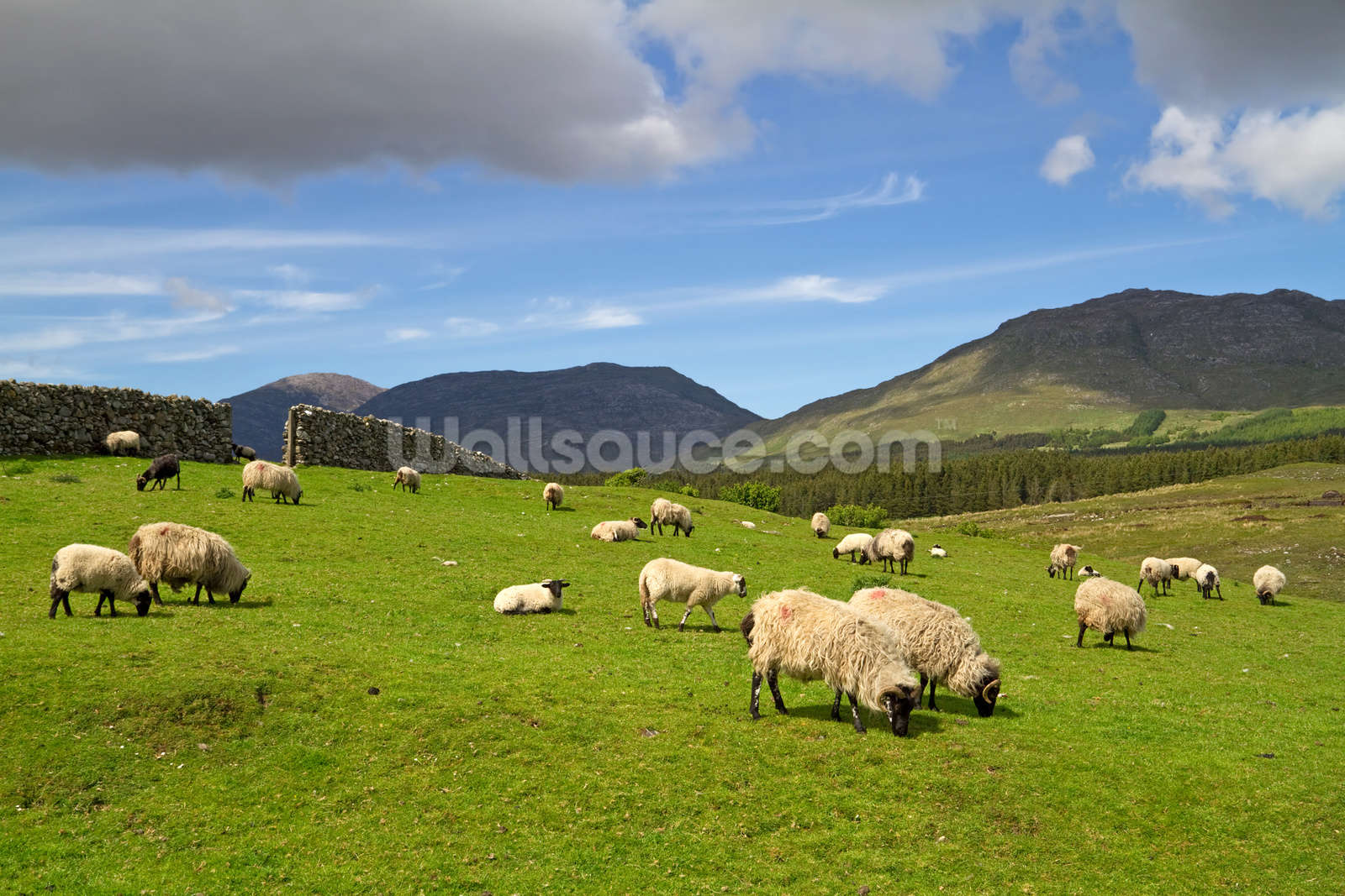 sheep grazing wallpaper mural wallsauce ussheep grazing wallpaper mural