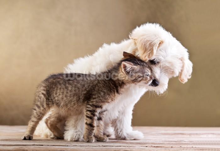 Dog And Cat Wallpaper Mural