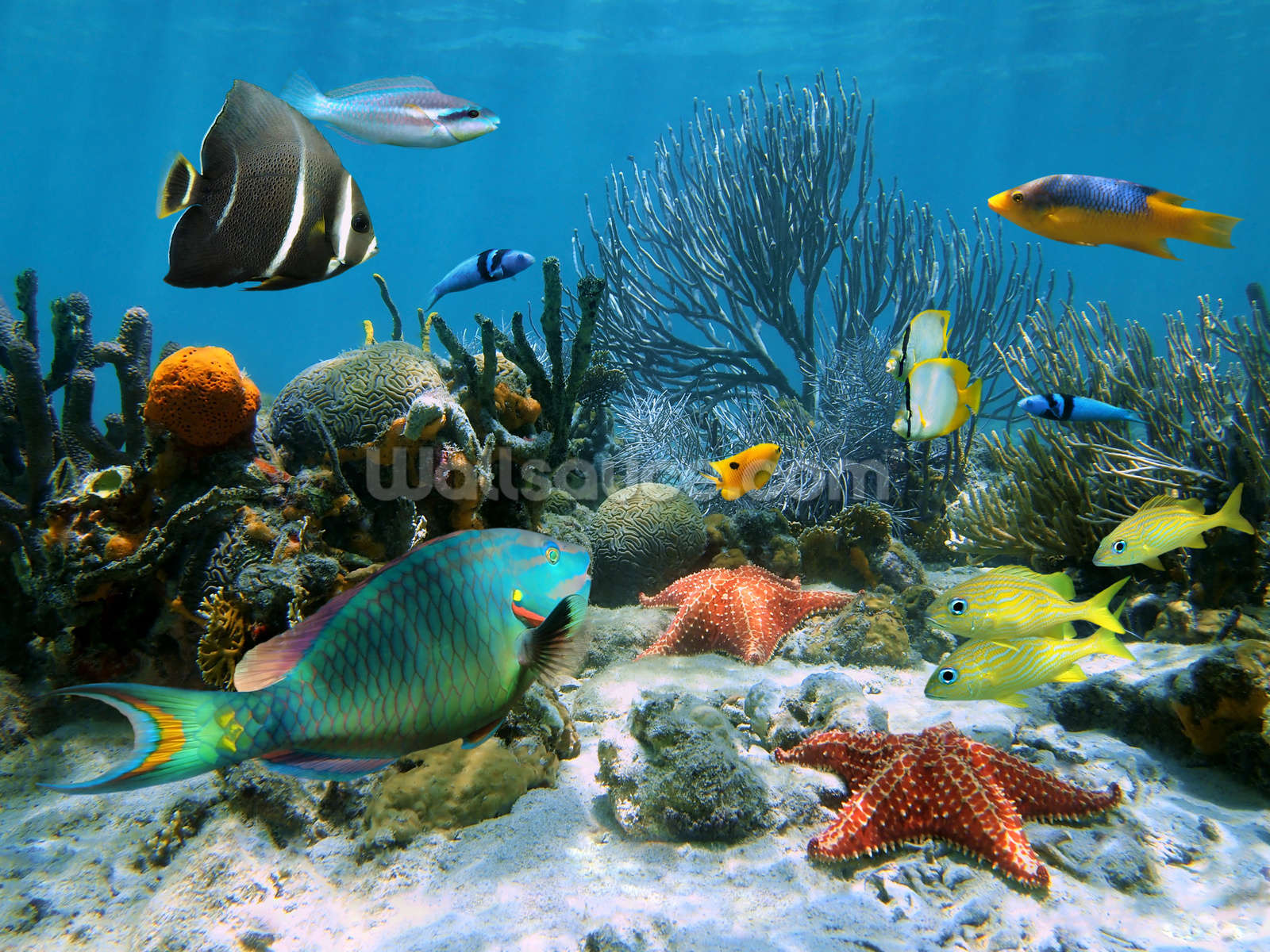 coral reef wallpaper wall mural wallsauce usa coral reef wall mural photo wallpaper