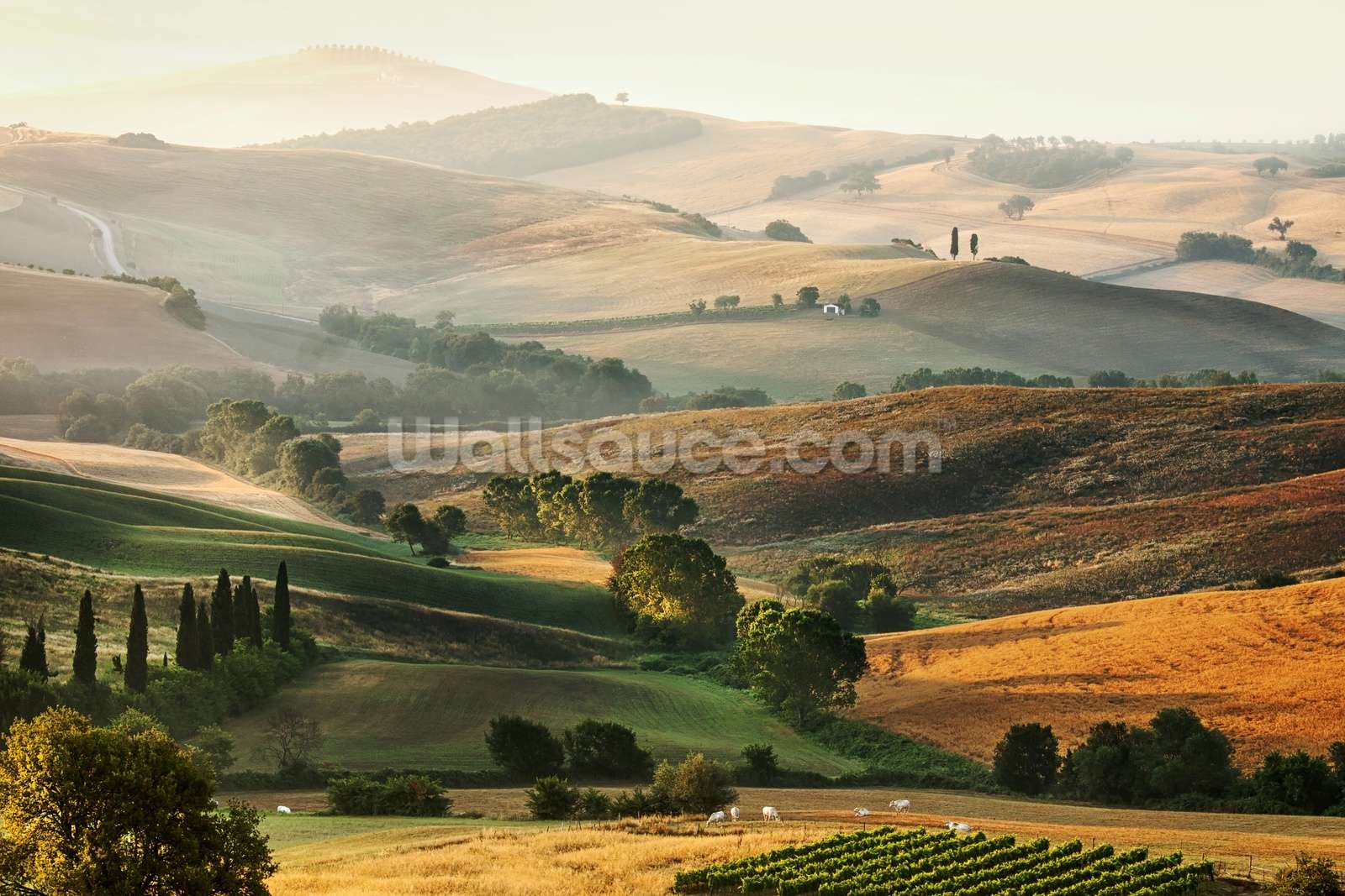 Italian Countryside Wall Mural Photo Wallpaper Part 60