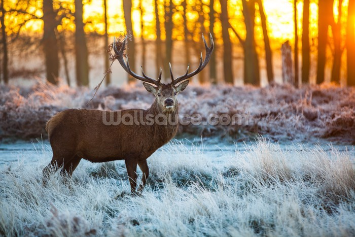 Red deer winter wallpaper wall mural wallsauce for Deer landscape wall mural