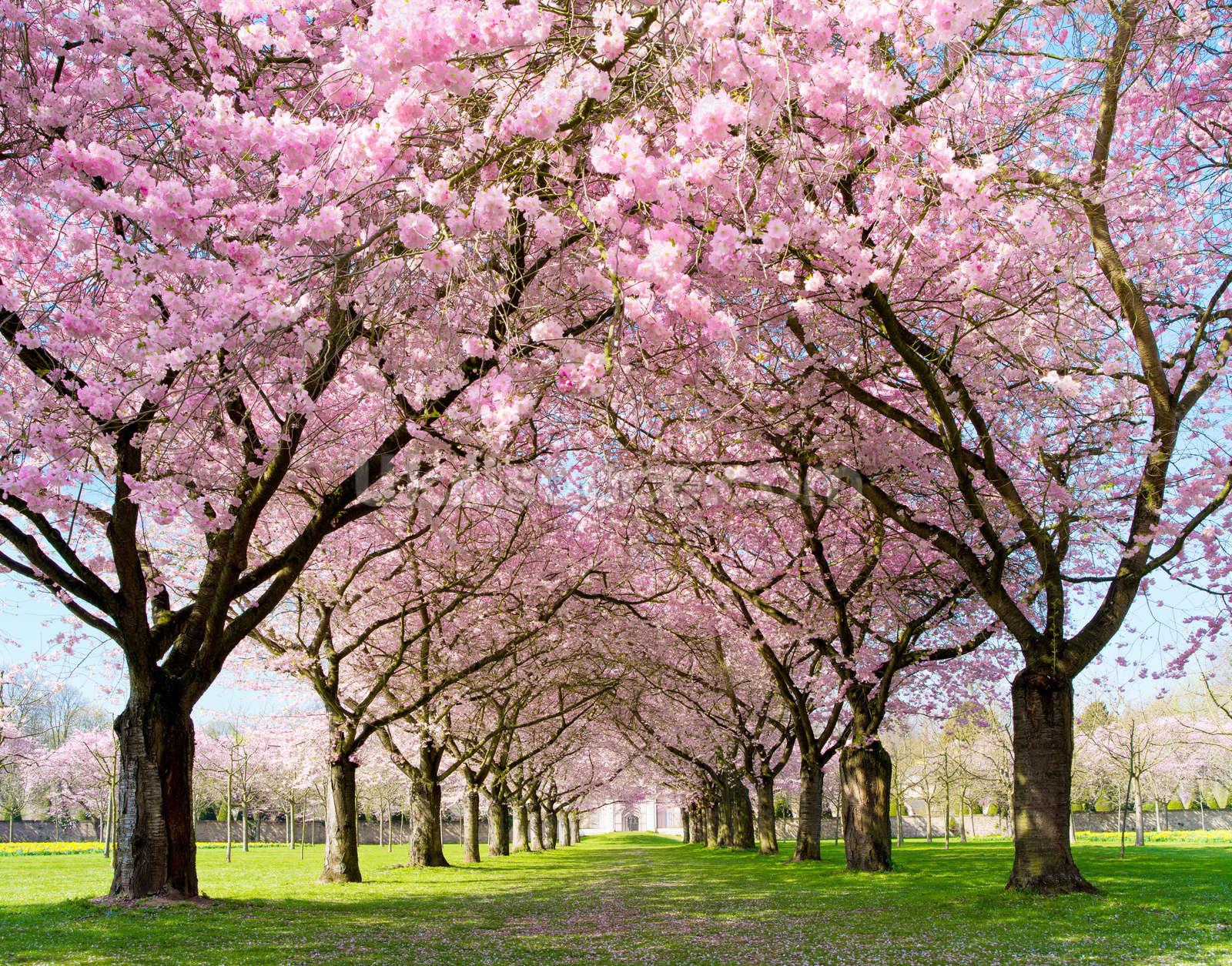 цветущие деревья во дворе  № 532104  скачать