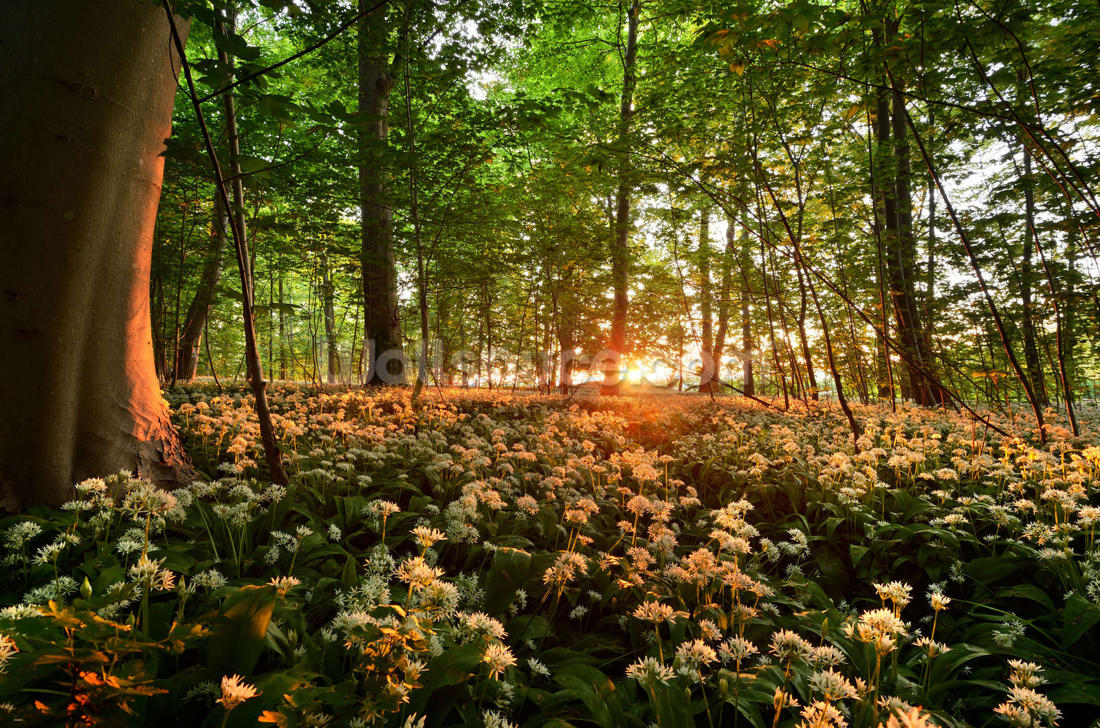 sunlight glow over forest flowers wallpaper wall mural wallsauce usa save your design for later