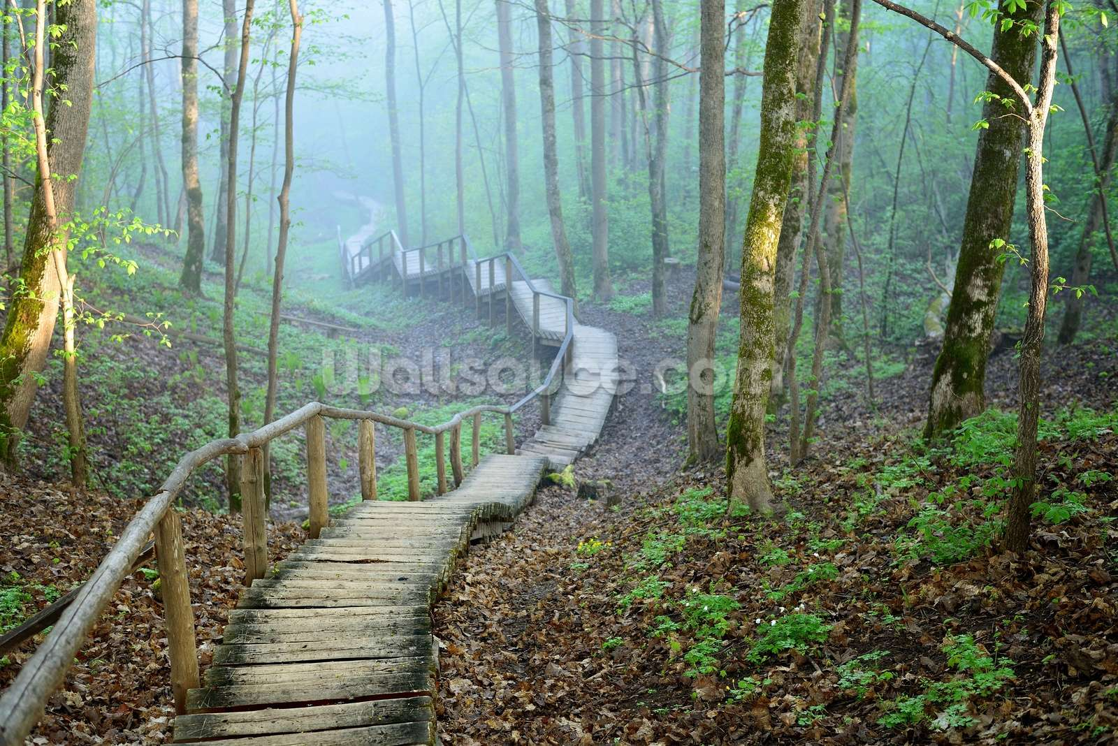 Foggy Forest Stairway Wallpaper Mural