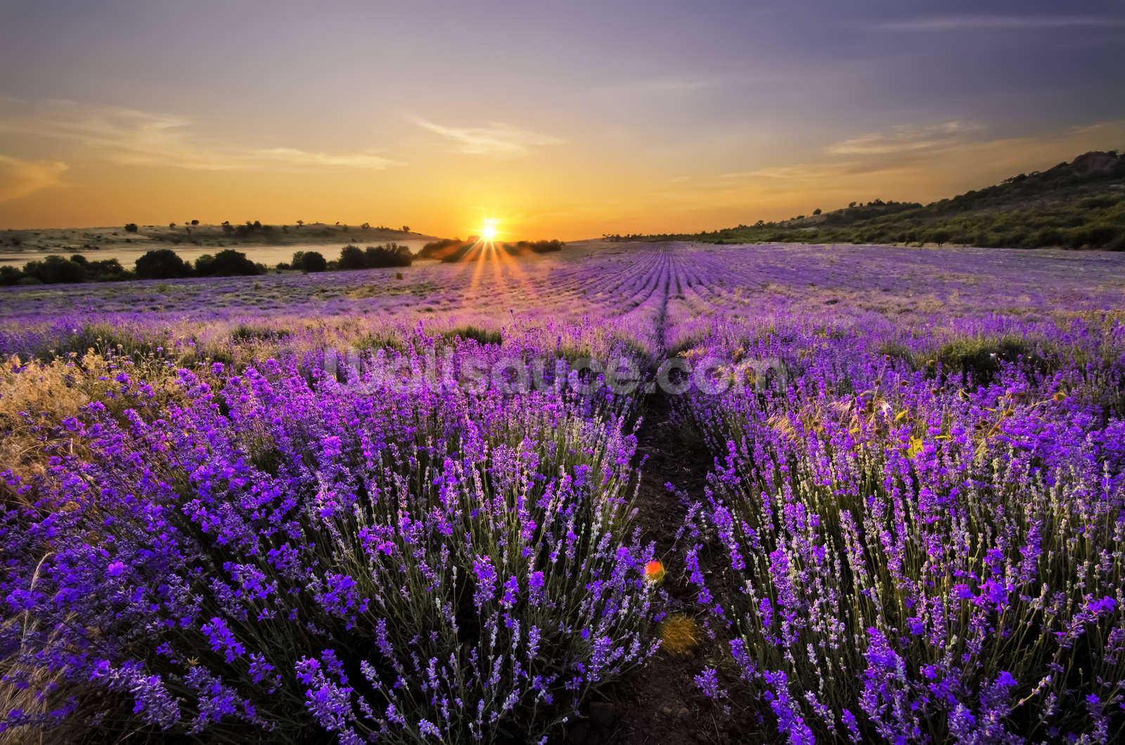 floral wallpaper flower wall murals wallsauce usa sunset over lavender field wallpaper mural