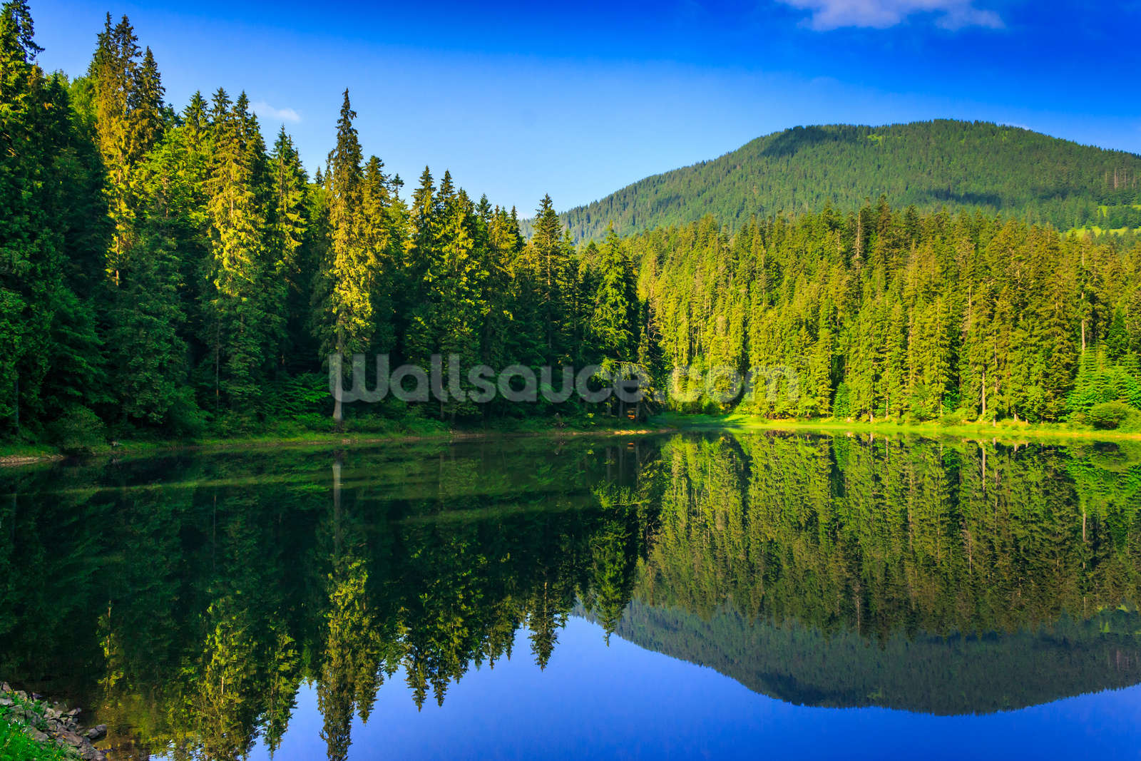 Nature's Green and Blue Wallpaper Wall Mural | Wallsauce USA