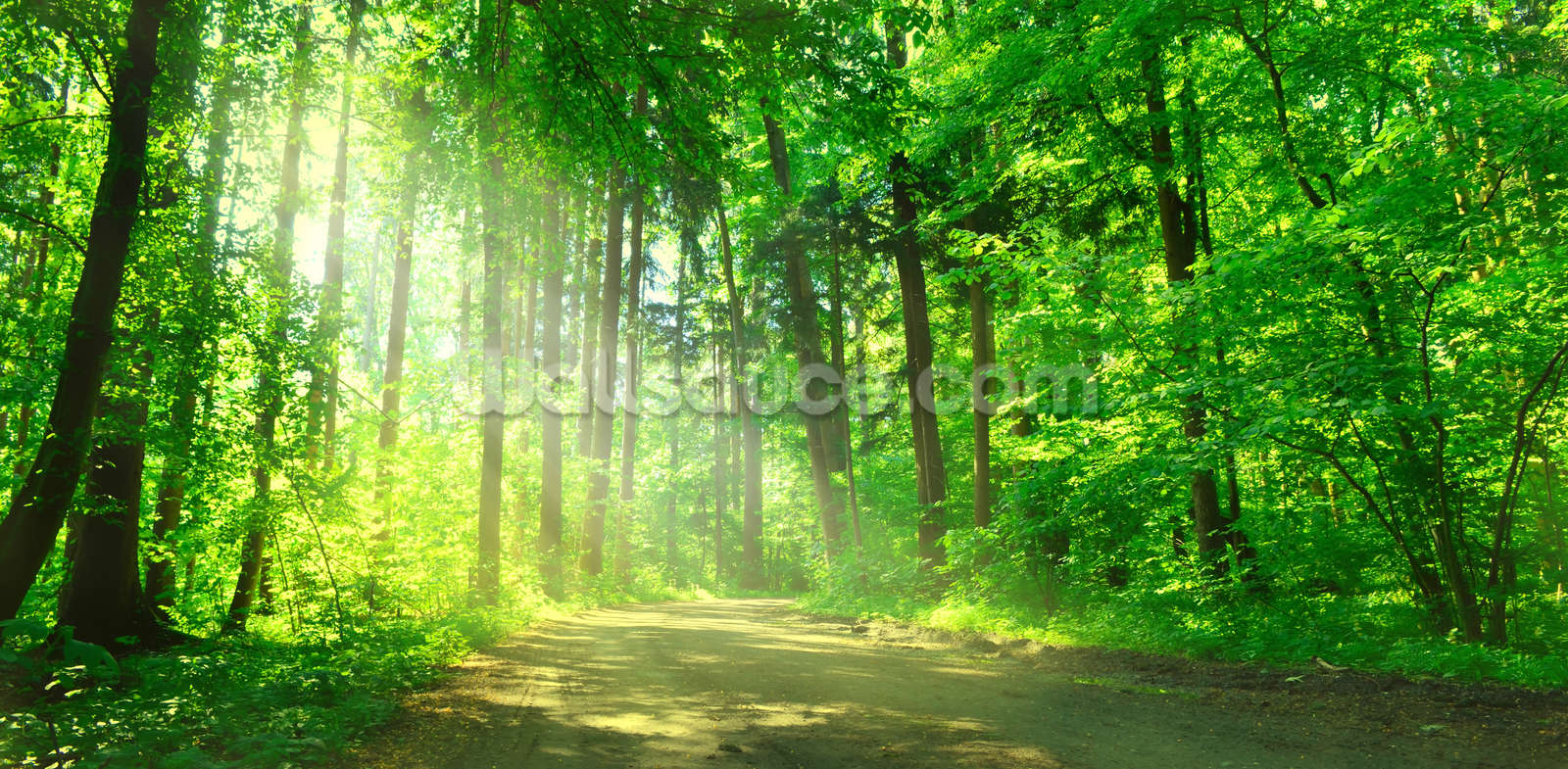 Forest Path In Sunshine Wall Mural Photo Wallpaper
