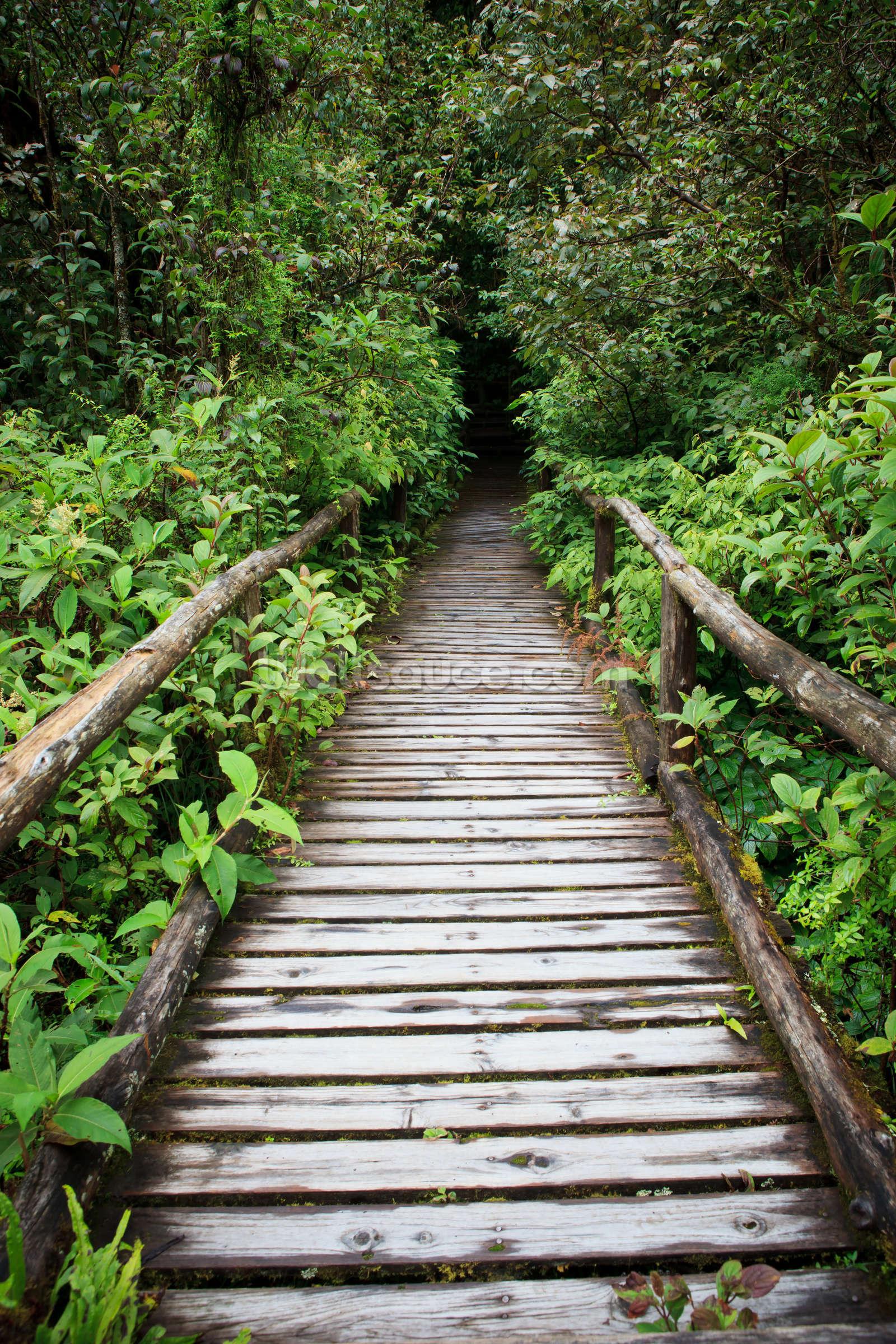 evergreen forest walkway wallpaper wall mural wallsauce evergreen forest walkway wall mural photo wallpaper