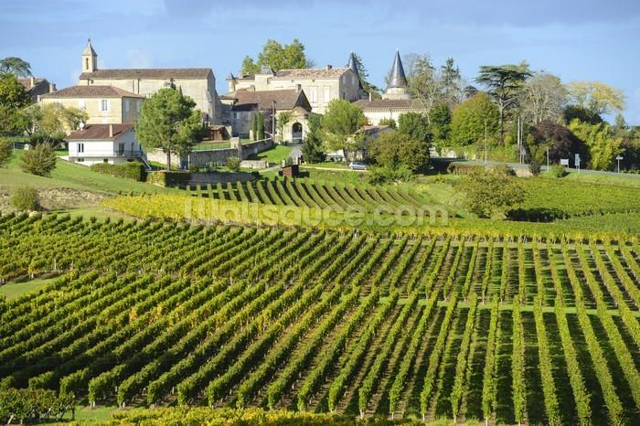 Saint Emilion Bordeaux Vineyards Wall Mural