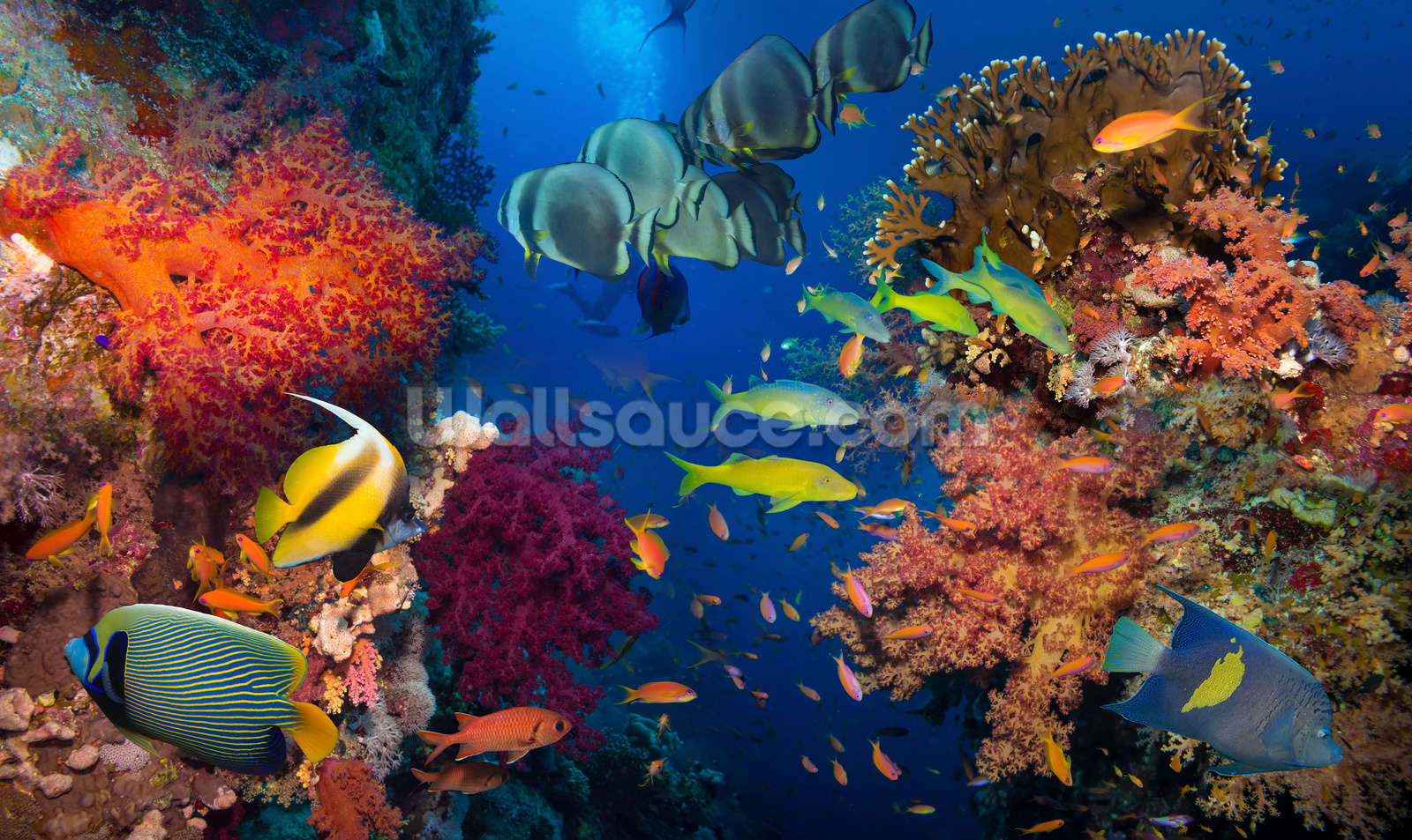 coral and fish wallpaper wall mural wallsauce australia coral and fish wall mural photo wallpaper