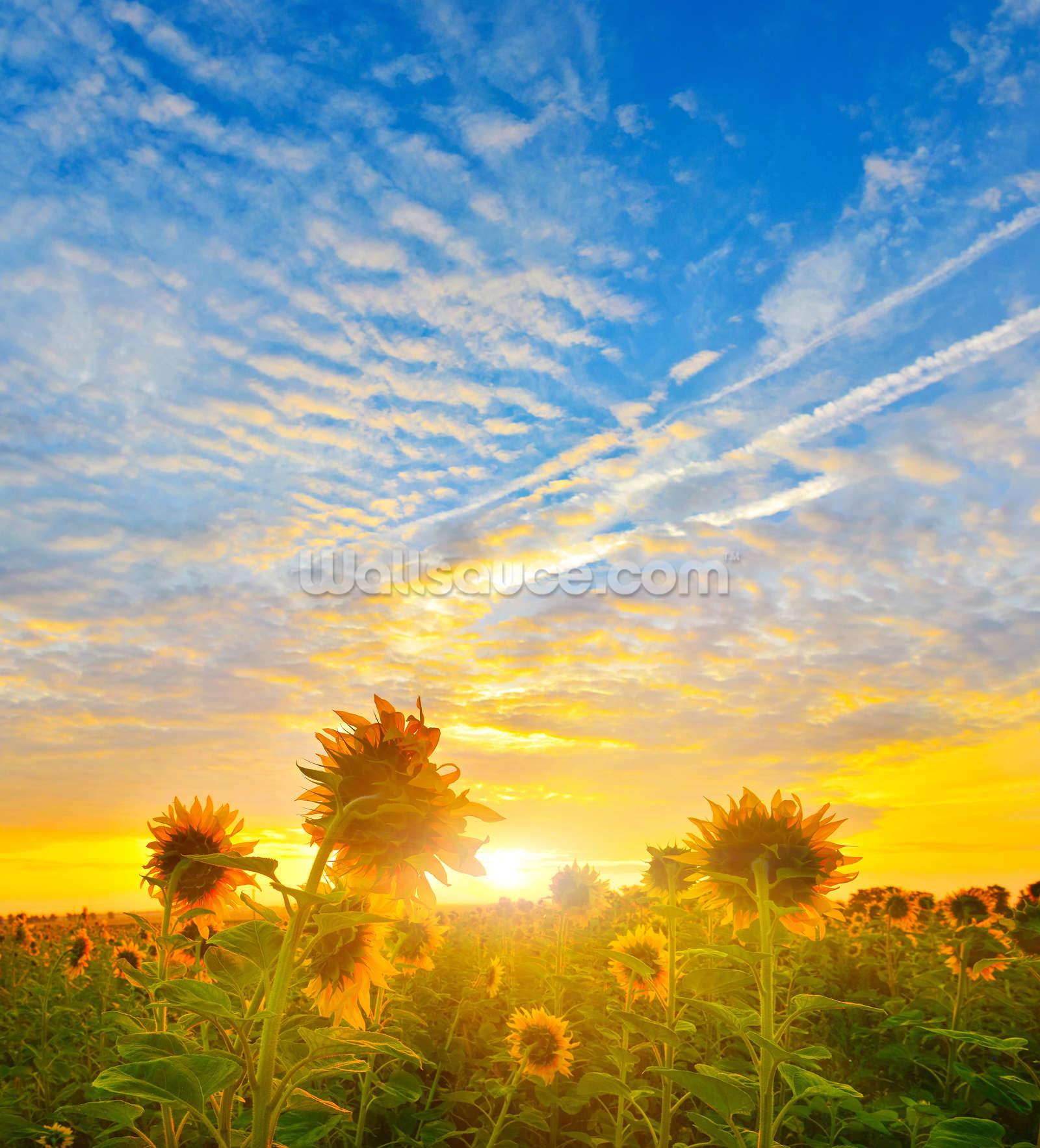 sunflower sunrise wallpaper 94472 interiordesign