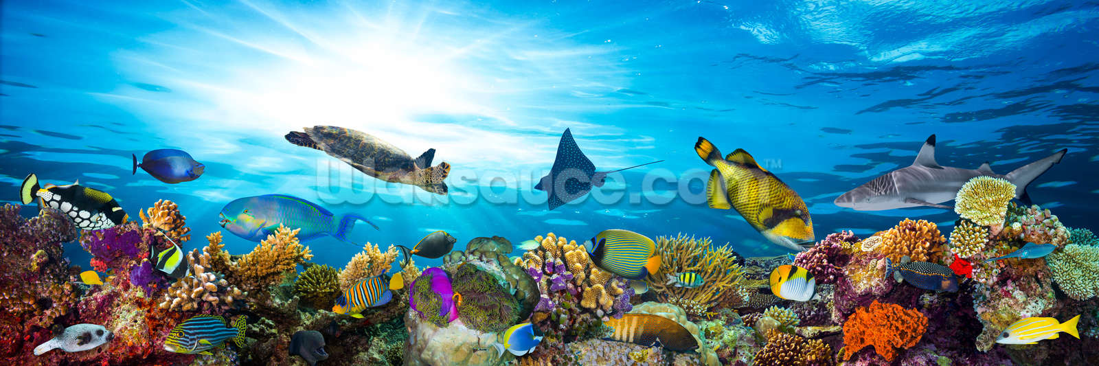Sea Life Coral Reef Panorama Wallpaper Mural