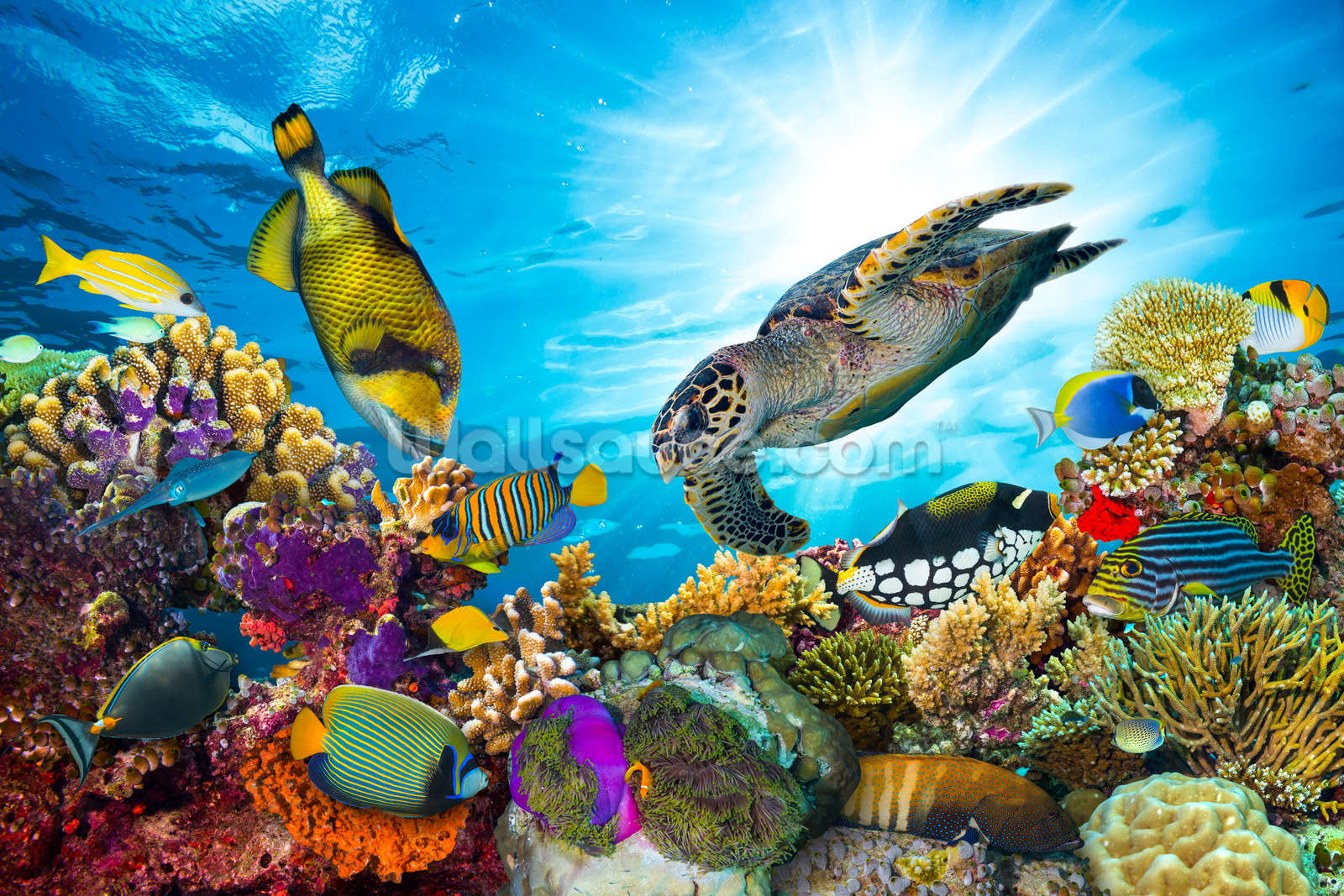 tropical fish wallpaper sea life wall murals wallsauce usa coral reef diversity mural wallpaper