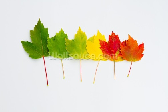Maple Leaf Line Up wall mural
