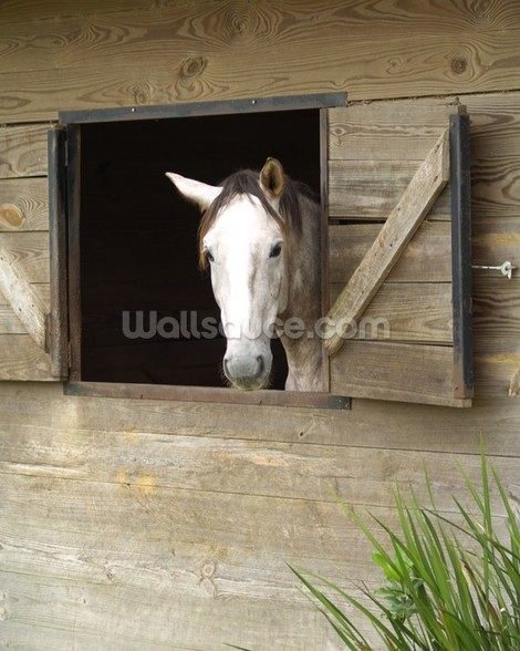 Stabled Horse mural wallpaper