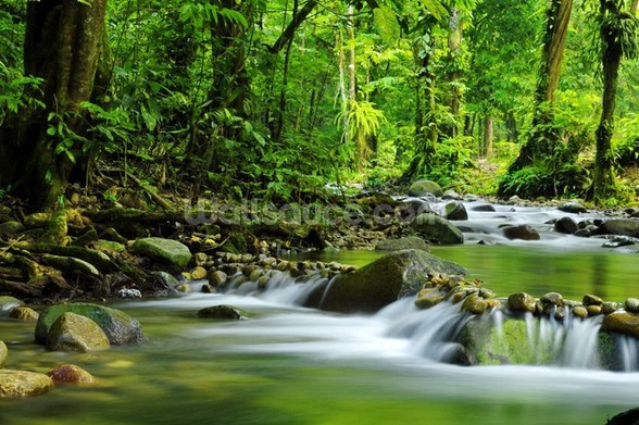 Beautiful Mountain Stream wallpaper mural