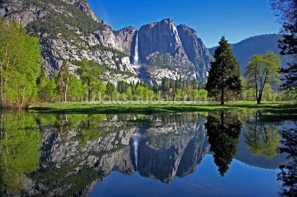 Yosemite National Park wall mural