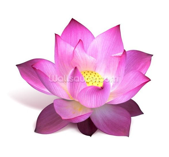 Lotus Flower mural wallpaper