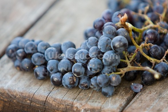Wine Grapes mural wallpaper