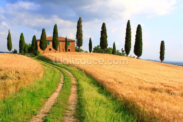 Tuscany Cypress Trees wall mural