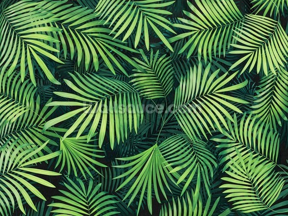 Leaves of Palm Tree wallpaper mural