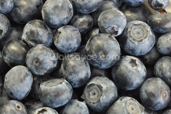 Blueberries wall mural