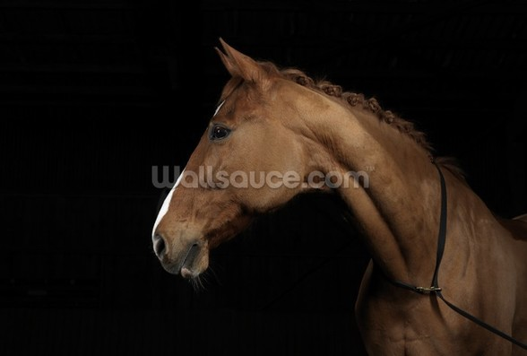 Handsome Horse wall mural