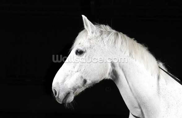 Handsome White Horse wall mural