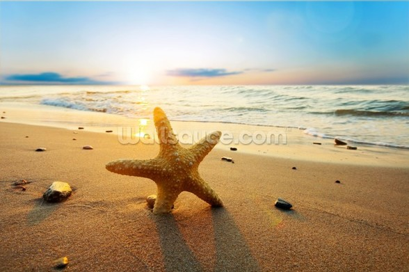 Sunset Starfish wall mural