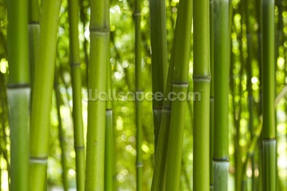 Bamboo trees wall mural bamboo trees wallpaper for Bamboo mural wallpaper