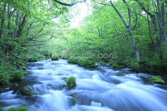 Spring Forest River mural wallpaper