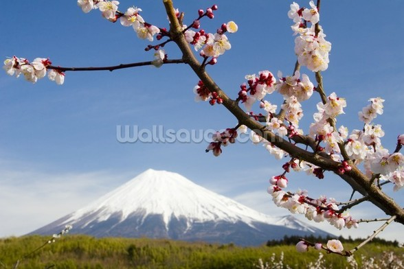 Mount Fuji mural wallpaper