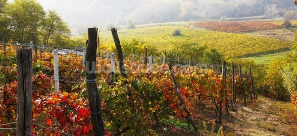 Vineyard in Bloom wall mural