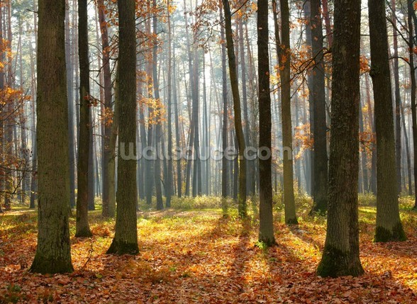 Autumn forest wall mural autumn forest wallpaper for Autumn forest wallpaper mural