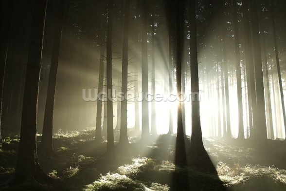 Light and Dark Forest wallpaper mural