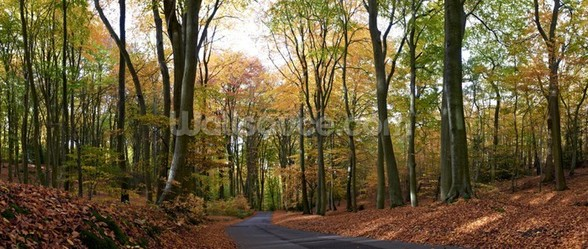 Colourful Autumn Woodland mural wallpaper