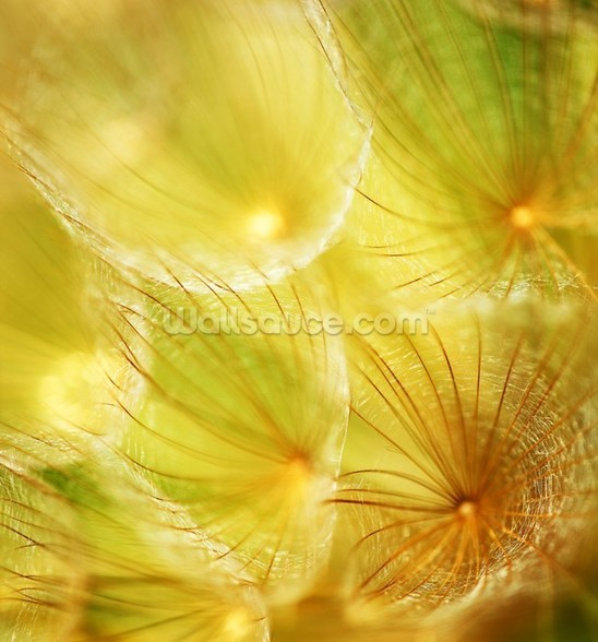 Soft Dandelion - Yellow wall mural