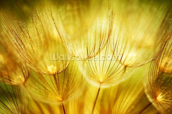 Soft Dandelion Flowers mural wallpaper
