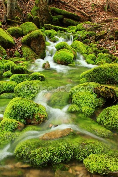 Mountain stream, mossy stones wall mural