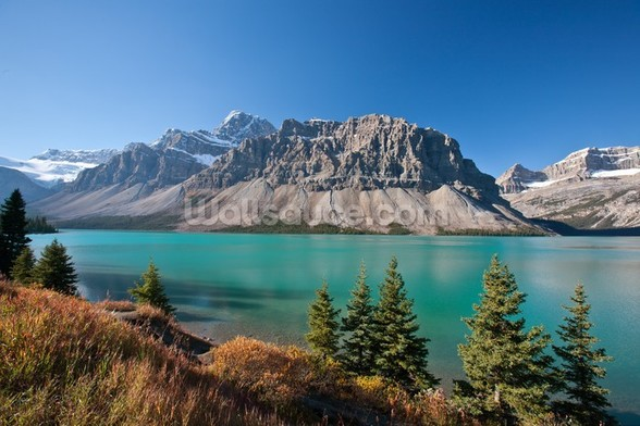 Beautiful Bow Lake, Alberta wall mural