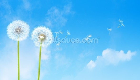 Dandelion Blue Sky wallpaper mural