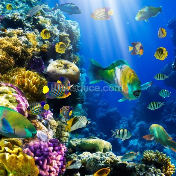 Coral Colony and Coral Fish mural wallpaper