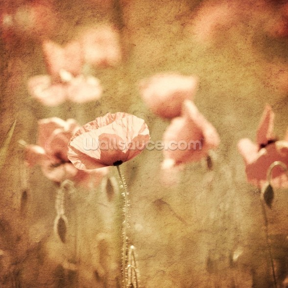 Poppies - Pink wall mural