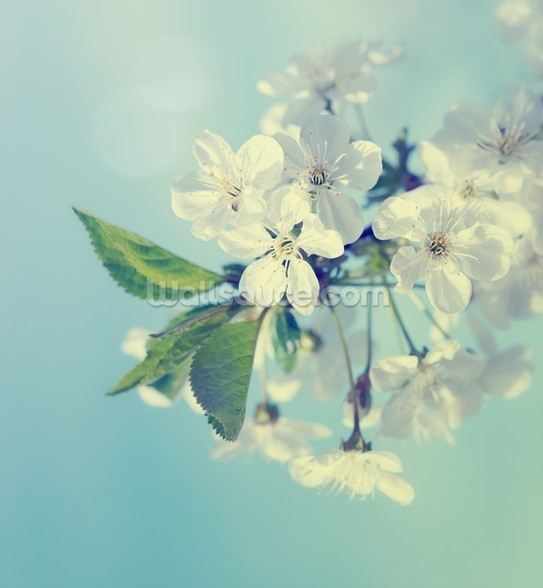 Cherry Blossoms mural wallpaper