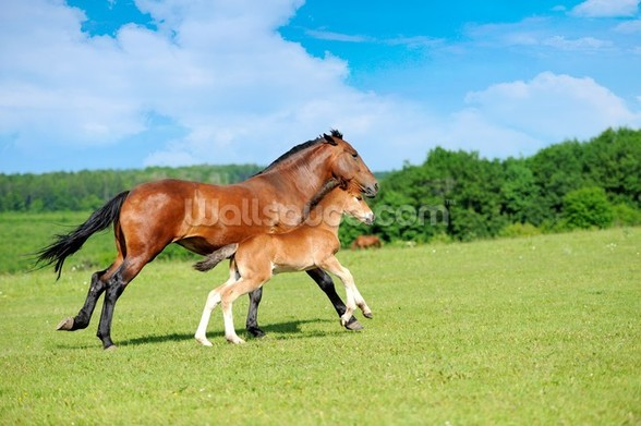 Horse and Foal wall mural