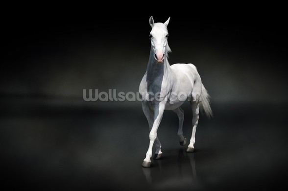 White Horse on Black wall mural